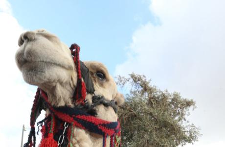Сборы в Израиле: экскурсия по Иерусалиму<br /><br />